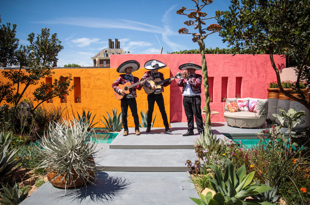 """A Mexican band play in the """"Beneath the Mexican Sky Garden"""" at the Chelsea Flower Show on May 22, 2017 in London, England. (Photo by Jack Taylor/Getty Images)"""