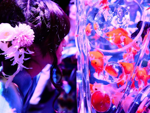 """A young women wearing the summer Kimono, """"Yukata"""" watches goldfishes during the press preview of """"Eco Edo Nihombashi Art Aquarium 2014"""" exhibition in Tokyo on July 10, 2014. The two-month-long goldfish exhibition will starts July 11. (Photo by Toshifumi Kitamura/AFP Photo)"""