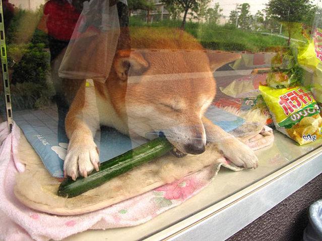 Dog Shopkeeper  In Musashi-Koganei,Tokyo
