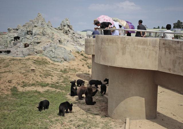 North Koreans look at bears at the newly opened Pyongyang Central Zoo in Pyongyang, North Korea, Tuesday, August 23, 2016. (Photo by Dita Alangkara/AP Photo)