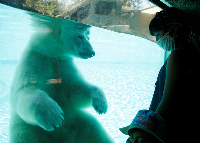 People observe a Polar Bear during the reopening to the public of the Guadalajara Zoo, in the state of Jalisco, Mexico, 20 July 2020. The Guadalajara zoo reopened its doors to the public after being closed for four months due to the coronavirus pandemic. (Photo by Francisco Guasco/EPA/EFE)