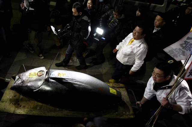 A bluefin tuna sold for a record $1.76 million at a Tokyo auction, nearly three times the previous high set last year – even as environmentalists warn that stocks of the majestic, speedy fish are being depleted worldwide amid strong demand for sushi. (Photo by Shuji Kajiyama/Associated Press)