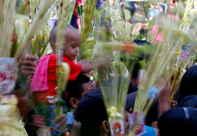 A boy is carried on the shoulders of his father as devotees wave palm fronds for blessing by a Roman Catholic priest in observance of Palm Sunday which also ushers the Holy Week Sunday, March 25, 2018 at Baclaran church in suburban Paranaque city, southeast of Manila, Philippines. Roman Catholics all over the world observe Palm Sunday by having palm fronds blessed by a priest to mark the entry of Jesus Christ into Jerusalem. (Photo by Bullit Marquez/AP Photo)
