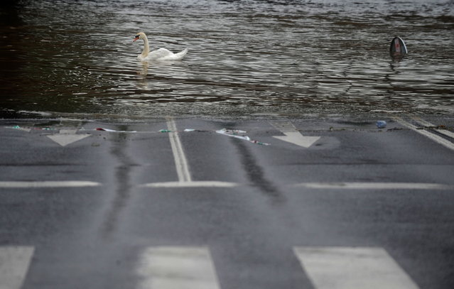 A swan swims on a flooded road is on June 03, 2013 in Prague. The Czech capital was flooded, with metro stations and elementary and secondary schools shut after the Vltava river rose, flooding parts of the historic city centre due to heavy rainfalls. (Photo by Michal Cizek/Reuters)