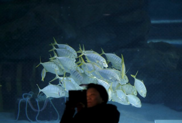 A woman takes selfie in front of a school of fish at the Coex Aquarium in Seoul, South Korea, December 9, 2015. (Photo by Kim Hong-Ji/Reuters)