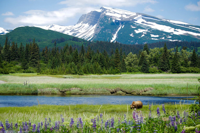 Lake Clark National Park. (Photo by Caters News)