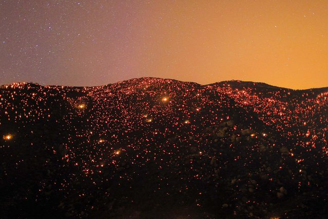 Embers from the Silver Fire glow in the night sky near Banning, California, on August 7, 2013. More than 5,000 acres were scorched. (Photo by David McNew/Reuters)