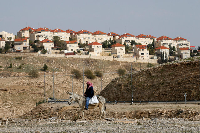A Palestinian man rides a donkey near the Israeli settlement of Maale Edumim, in the occupied West Bank, December 28, 2016. (Photo by Baz Ratner/Reuters)