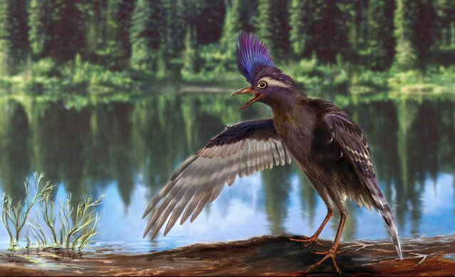 This image obtained on May 5, 2015 courtesy of the Institute of Vertebrate Paleontology and Paleoanthropology in Bejing, shows a computer generated image of an Ornithuromorph, a specialized wading bird from the Early Cretaceous of China. Modern birds may have evolved six million years earlier than thought, said Chinese palaeontologists Wednesday after analysing the fossil remains of a previously unknown prehistoric relative. (Photo by Zongda Zhang/AFP Photo/Institute of Vertebrate Paleontology and Paleoanthropology)