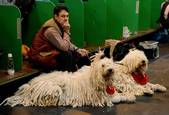 A man sits with his Komondor dogs during the first day of the Crufts dog show on March 6, 2014 in Birmingham central England. (Photo by Andrew Yates/AFP Photo)