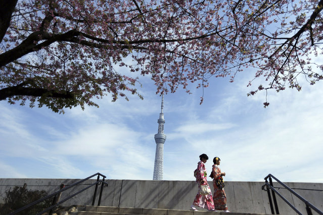Two women with Japanese traditional clothing or kimono stroll to see cherry blossom at Sumida Park near Tokyo Skytree skyscraper in the background in Tokyo, Saturday, March 29, 2014. Tens of thousands of admirers will be expected to show up at the park to enjoy the white pink blossoms. (Photo by Eugene Hoshiko/AP Photo)