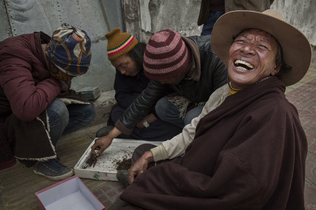 A Tibetan nomad laughs as vendors buy and sell cordycep fungus on May 20, 2016 at a market in Sershul on the Tibetan Plateau in the Garze Tibetan Autonomous Prefecture of Sichuan province. (Photo by Kevin Frayer/Getty Images)