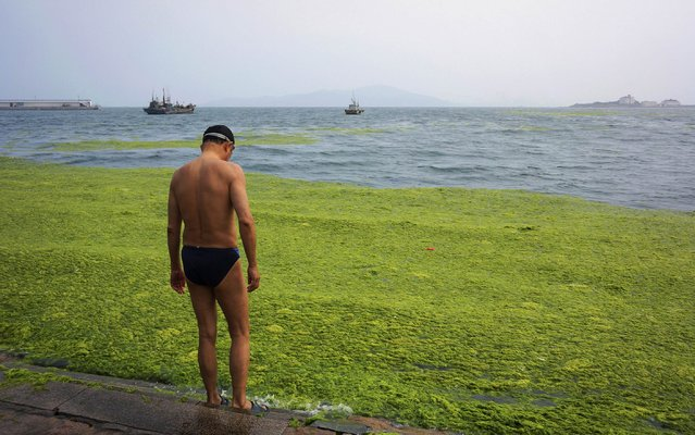 A man stands beside the algae-covered coastline of Qingdao, Shandong province, June 26, 2014. (Photo by Reuters/Stringer)