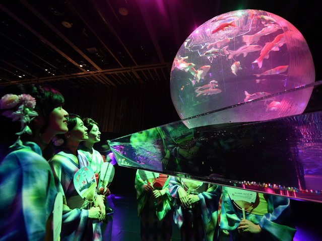 """Women wearing the summer Kimono, """"Yukata"""" watch goldfishes during the press preview of """"Eco Edo Nihombashi Art Aquarium 2014"""" exhibition in Tokyo on July 10, 2014. The two-month-long goldfish exhibition will starts July 11. (Photo by Toshifumi Kitamura/AFP Photo)"""