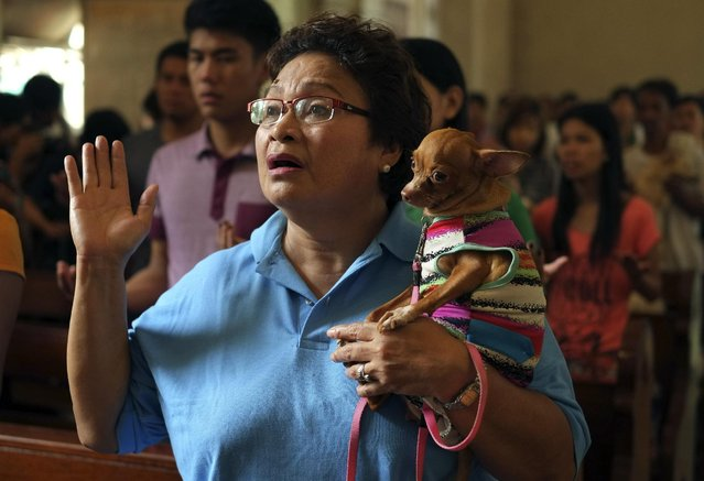 A Filipino pet owner carries her dog as she prays before the animal blessing rites at the Our Lady of Remedies Parish Church in Malate district, Manila, Philippines on Sunday, October 5, 2014. (Photo by Aaron Favila/AP Photo)