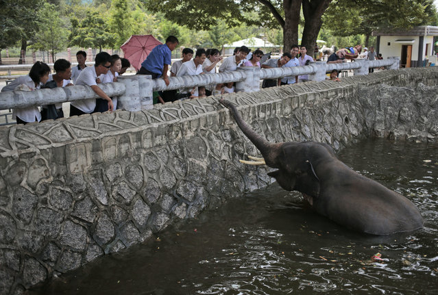 North Koreans feed an elephant at the newly opened Pyongyang Central Zoo in Pyongyang, North Korea, Tuesday, August 23, 2016. (Photo by Dita Alangkara/AP Photo)