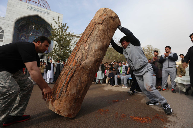 An Afghan strenght athlete erects a trunk during a strongman show in Herat, Afghanistan, 08 November 2016. For nearly two decades during the Taliban rule in Afghanistan, sports and games including boxing, soccer, volleyball, kite flying and chess had been banned as immoral and unlawful. (Photo by Jalil Rezayee/EPA)