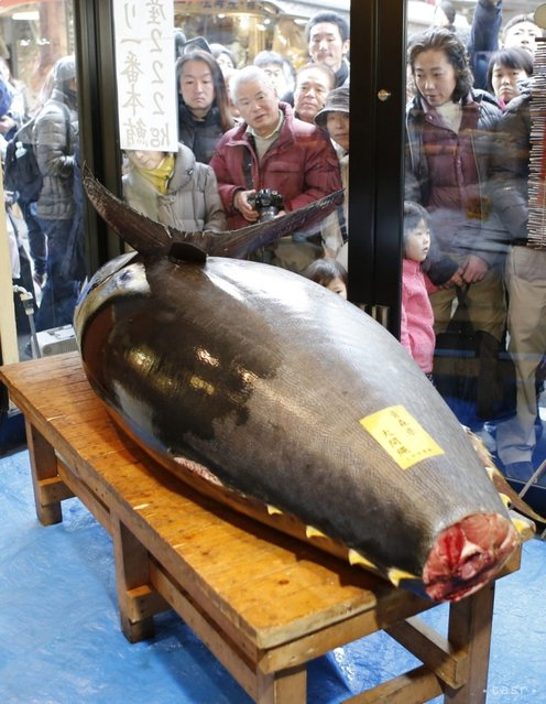 People look at the tuna while it was displayed at the restaurant. (Photo by Koji Sasahara/Associatred Press)