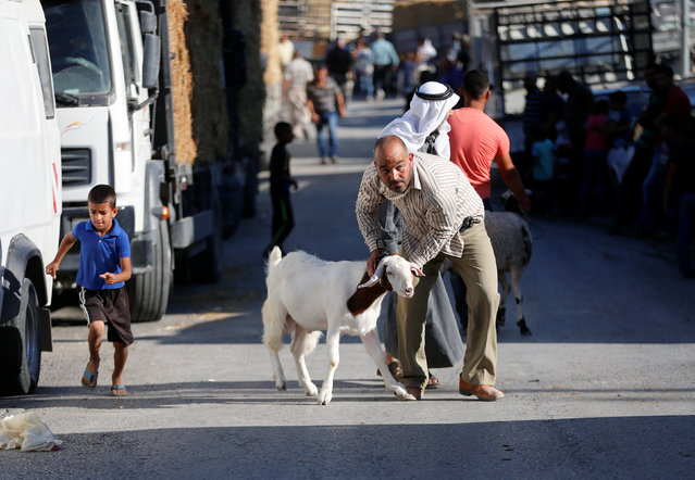 A Palestinian man drags a goat at a livestock market, ahead of the Eid al-Adha festival, in the West Bank town of Bethlehem September 10, 2016. (Photo by Ammar Awad/Reuters)