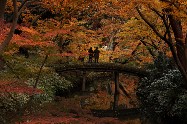 Two visitors take pictures of autumn leaves at Rikugien Garden Tuesday, December 10, 2019, in the Bunkyo district of Tokyo. (Photo by Jae C. Hong/AP Photo)