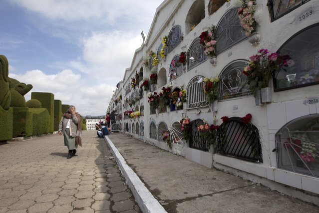A woman looks for a grave at a cemetery, known for its topiary art, during the observance of the Day of the Dead, in Tulcan, Ecuador November 2, 2015. (Photo by Guillermo Granja/Reuters)