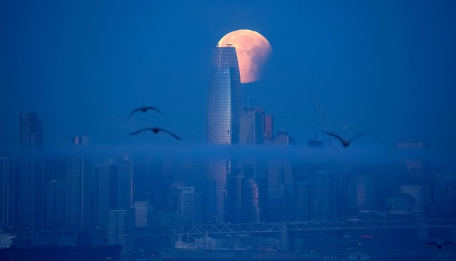 """A super blue blood moon is seen setting behind Salesforce Tower in San Francisco, California before dawn on January 31, 2018. Stargazers across large swathes of the globe – from the streets of Los Angeles to the slopes of a smouldering Philippine volcano – had the chance to witness a rare """"super blue blood Moon"""" Wednesday, when Earth's shadow bathed our satellite in a coppery hue. (Photo by Josh Edelson/AFP Photo)"""