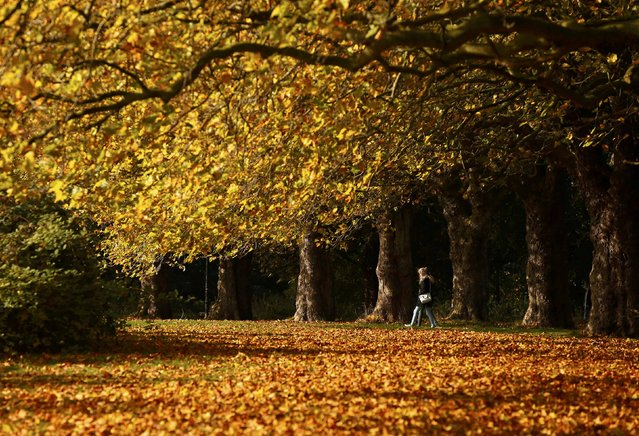 People walk through leaves in Sefton Park during an Autumn day in Liverpool, Britain October 22, 2015. (Photo by Phil Noble/Reuters)