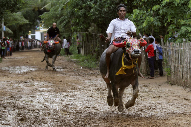 Men ride on buffaloes during the annual buffalo-racing ceremony at Virhear Sour village in Kandal province, 30 km (19 miles) southeast of Phnom Penh October 4, 2013. The ceremony, which started more than 70 years ago, is held to honour the Neakta Preah Srok pagoda spirit. It also marks the end of the Festival of Pchum Ben, which runs from September 20 to October 4. After the ceremony, the buffaloes are sold to the highest bidder. (Photo by Samrang Pring/Reuters)