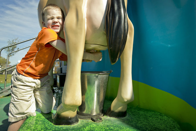 Mason Field, 6, of Celina, Texas, pretends to milk a plastic Jersey cow at the Star of Texas Fair and Rodeo, Thursday, March 26, 2015, in Austin. (Photo by Jay Janner/AP Photo/Austin American-Statesman)