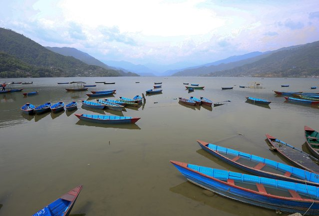Line of empty boats lay at Phewa lake during general strike in Pokhara city, 205 Kilometers away from capital Kathmandu, Nepal, 07 April 2015. Major cities and towns across Nepal were affected as a three-day general strike called by the 30-party opposition alliance took effect on 07 April 2015, in a protest over the drafting of a new constitution. Markets, schools, transportation and tourism were badly affected. (Photo by Narendra Shrestha/EPA)