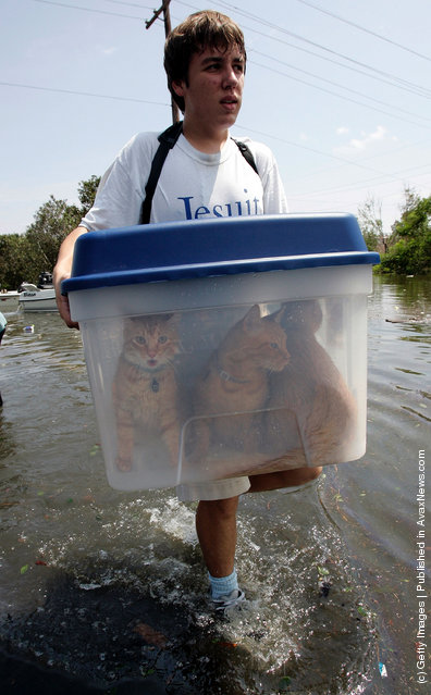 Alex Perez carries his cats to dry land after being rescued by boat from his house near Lake Pontchatrain flooded by Hurricane Katrina August 30, 2005 in New Orleans, Louisiana