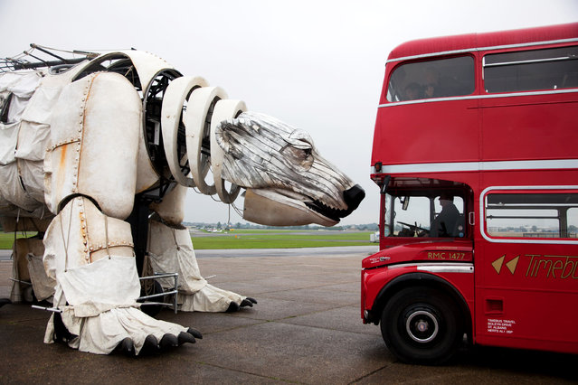 Giant Polar Bear Of London