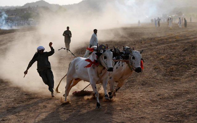 A Pakistani farmer tries to control his bulls as he competes in a traditional bull race in Bilawal village in Chakri, some 65 kilometers from Islamabad on July 4, 2019. Hundreds of people gather whenever there is a bull race held in Pakistan which are usually the highlight of festivals organized in rural areas of the Asian country, and attract lots of spectators due to their thrilling nature. The traditional competition attracts landlords and farmers from all around the province where the race is held, and they all bring their fastest and strongest bulls in hopes of gaining a reputation. (Photo by Aamir Qureshi/AFP Photo)
