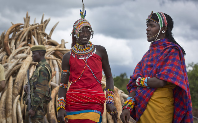 Maasai in ceremonial dress stand around after having their photograph taken with visitors, as a ranger from the Kenya Wildlife Service (KWS) guards one of around a dozen pyres of ivory, in Nairobi National Park, Kenya Thursday, April 28, 2016. (Photo by Ben Curtis/AP Photo)