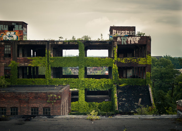 Foliage lines the walls of the abandoned factories of Westinghouse Electric of Cleveland, Ohio. (Photo by Jonny Joo/Barcroft Media)