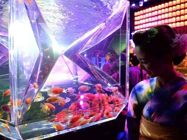 "A young woman wearing the summer Kimono, ""Yukata"" watches the goldfishes during the press preview of ""Eco Edo Nihombashi Art Aquarium 2014"" exhibition in Tokyo on July 10, 2014. The two-month-long goldfish exhibition will starts July 11. (Photo by Toshifumi Kitamura/AFP Photo)"