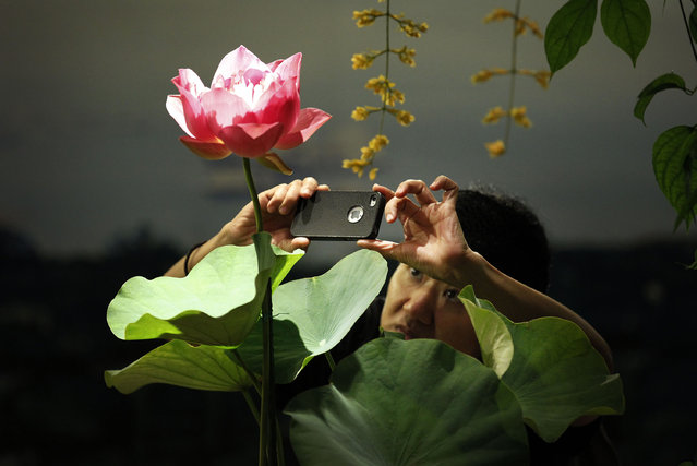 A lady uses her smartphone to photograph a Water Lily at the Singapore Garden Festival on Thursday July 12, 2012 in Singapore. (Photo by Wong Maye-E/AP Photo)