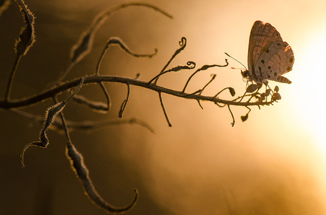 Butterfly at sunset: Photographer Toni Guetta submitted this macro shot of a butterfly with the sunset in the background near Hod ha'sharon, Israel. (Photo by Toni Guetta/National Geographic Photo Contest