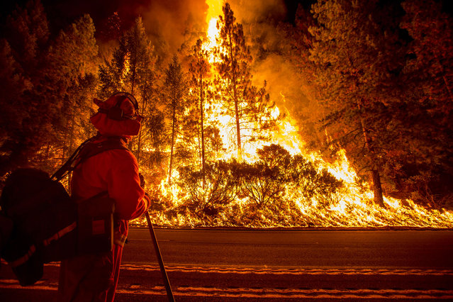 A firefighter battling the King Fire watches as a backfire burns along Highway 50 in Fresh Pond, California September 16, 2014. The fire led officials to call on about 400 people to evacuate from areas threatened by the blaze, Cal Fire spokeswoman Alyssa Smith said. It has charred more than 11,500 acres (4,654 hectares) and was 5 percent contained on Tuesday. (Photo by Noah Berger/Reuters)