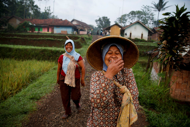 Women share a joke as they walk to a paddy field in Cikawao village of Majalaya, West Java province, Indonesia, October 12, 2017. (Photo by Reuters/Beawiharta)