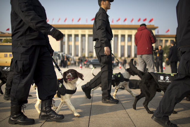 Chinese police and sniffer dogs patrol on Tiananmen Square before the closing ceremony of China's 19th Party Congress at the Great Hall of the People in Beijing, Tuesday, October 24, 2017. (Photo by Mark Schiefelbein/AP Photo)