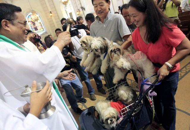 Fr. Leo Distor, a Catholic priest, blesses puppies during a celebration of the feast day of the Patron Saint of Animals, Saint Francis of Assisi, at a Catholic church in Manila October 5, 2014. (Photo by Romeo Ranoco/Reuters)