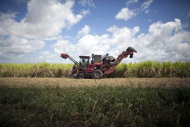 A sugarcane harvester is seen at a sugarcane field in Candelaria, Cuba, in this file image from March 3, 2015. (Photo by Alexandre Meneghini/Reuters)
