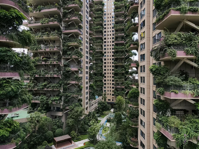 Eight 30-storey apartment buildings, which are all covered by green as various plants are put on the balcony, make the residential area look like an urban forest, Chengdu city, southwest China's Sichuan province, 7 September 2020. Only about ten household live in tree-like apartment buildings. Most residents reluctant to move in because plants attract insects. (Photo by Rex Features/Shutterstock/China Stringer Network)