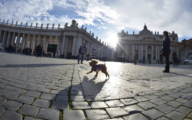 A dog runs on St Peter's square on March 14, 2013 at the Vatican. Pope Francis celebrated the same day his first mass as pontiff in the Sistine Chapel together with the cardinals who elected him the day before. (Photo by Johannes Eisele/AFP Photo)