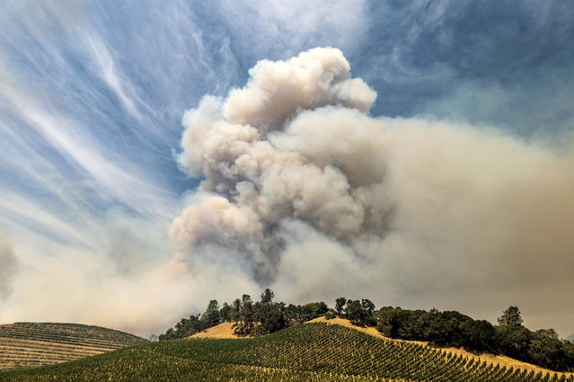 A plume rises over a vineyard in unincorporated Napa County as the Hennessey Fire burns on Tuesday, August 18, 2020. Fire crews across the region scrambled to contain dozens of blazes sparked by lightning strikes as a statewide heat wave continues. (Photo by Noah Berger/AP Photo)