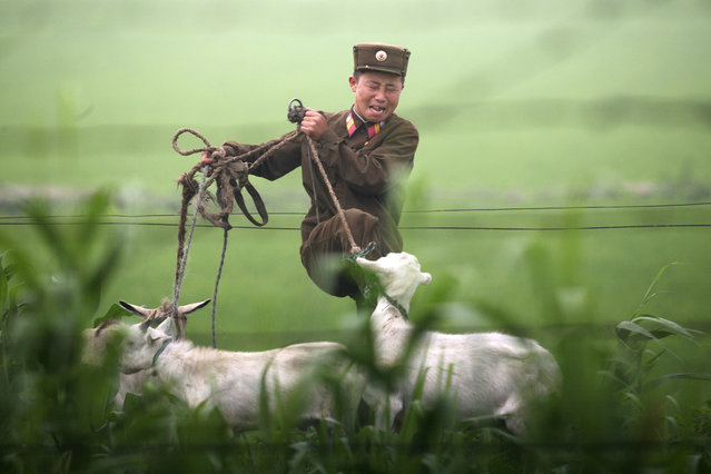 A North Korean soldier kicks a goat on the banks of the Yalu River near the North Korean town of Sinuiju, July 5, 2009. (Photo by Jacky Chen/Reuters)