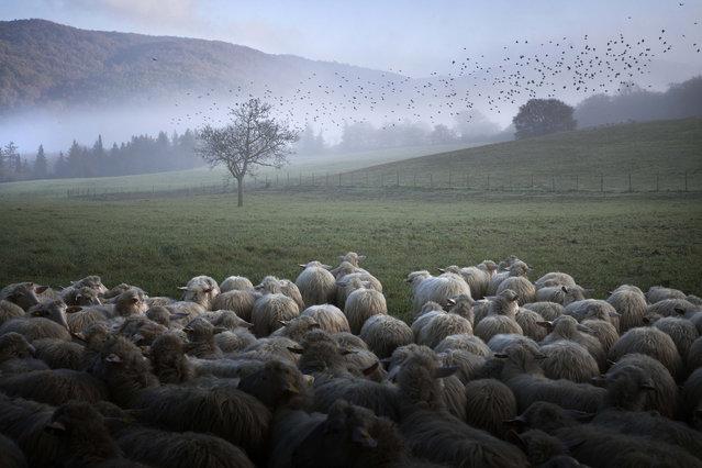 Daily Life in Radicondoli by photographer Marco Sgarbi