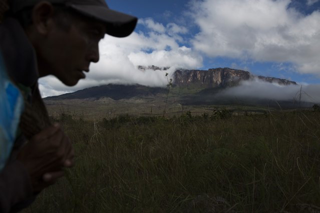 A Pemon indigenous porter walks on the road to Mount Roraima, near Venezuela's border with Brazil January 14, 2015. (Photo by Carlos Garcia Rawlins/Reuters)
