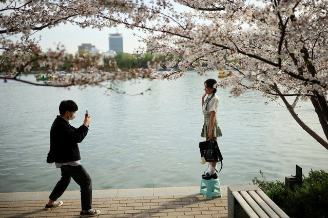 People take a photo next to a blooming tree during cherry blossom season in Yuyuantan Park in Beijing, China, March 31, 2021. (Photo by Thomas Peter/Reuters)